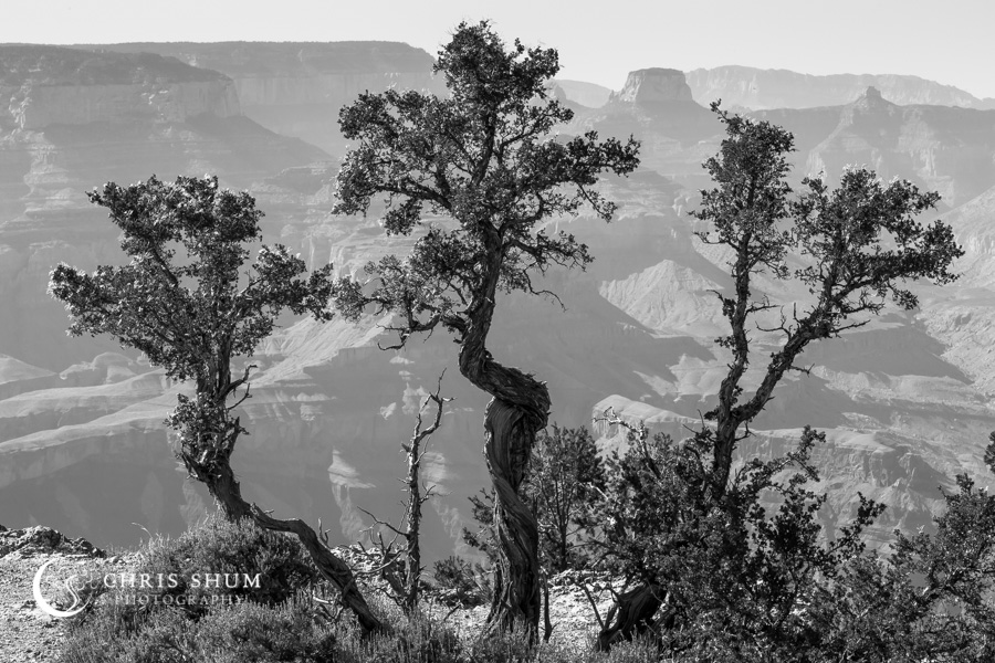 Celebrating_National_Park_Service_Centennial_at_Grand_Canyon_09