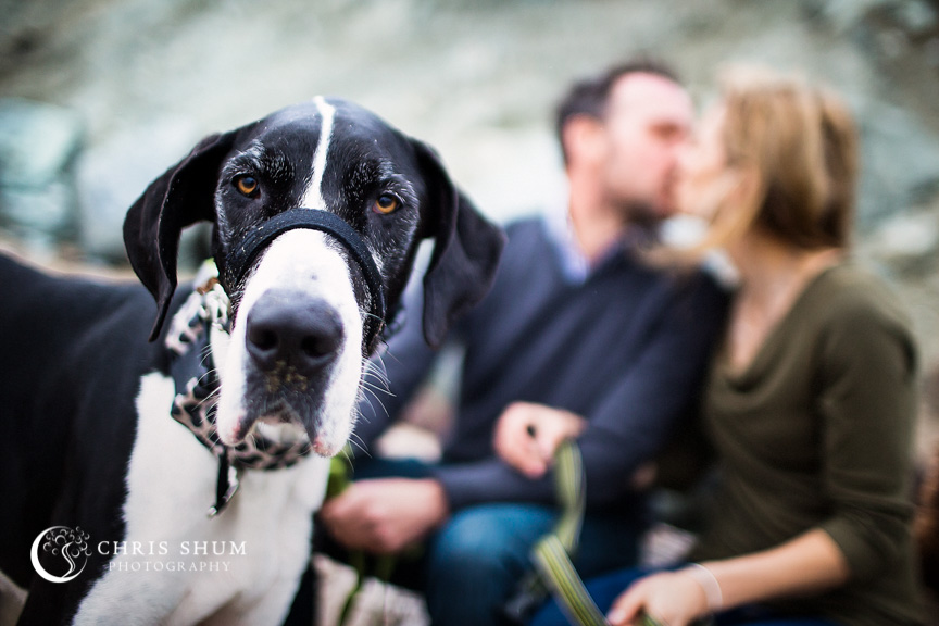 San_Francisco_wedding_photographer_Engagement_session_with_furry_babies_at_Marshall_Beach_11