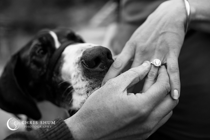 San_Francisco_wedding_photographer_Engagement_session_with_furry_babies_at_Marshall_Beach_14